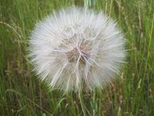 Free Dandelion Head Royalty Free Stock Photo - 88193365