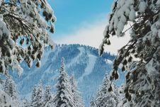 Free Snow On Mountain Pine Trees Royalty Free Stock Images - 88193409