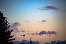 Free Birds On Sunset Sky Royalty Free Stock Photography - 88193947