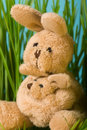 Free Bunny Royalty Free Stock Photos - 8820138