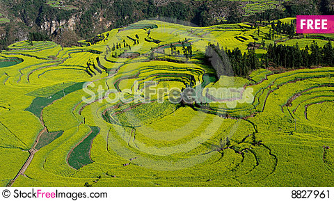 Terraced rape field of Luoping Stock Photo