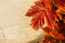 New Leaves And Tree Sawn End Stock Photography