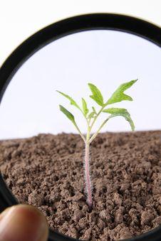 Free Seedling Stock Images - 8821524