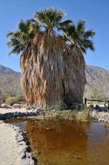 Free Palm Trees Royalty Free Stock Photos - 8822108