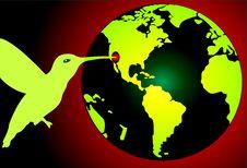 Free Globe Stock Images - 8822384