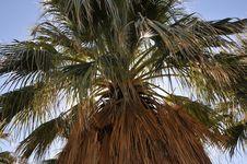 Free Palm Tree Royalty Free Stock Photography - 8822617