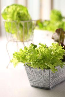 Free Fresh Salad-5.JPG Stock Photos - 8822783