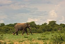 Free African Elephant Stock Images - 8822974