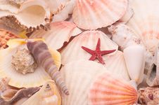 Free Seashells In Closeup Royalty Free Stock Photo - 8824355