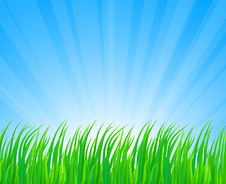 Free Lush Grass. Royalty Free Stock Photos - 8825128