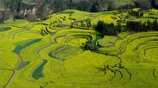 Free Terraced Rape Field Of Luoping Stock Image - 8827961