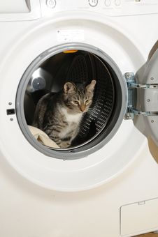 Free Clothes Washer And Cat Stock Photography - 8829432