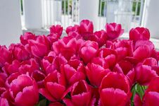 Free The Flowering Of Tulips In City Park Royalty Free Stock Photography - 88255307
