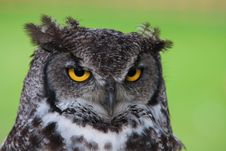 Free Black White And Gray Owl Royalty Free Stock Photography - 88263097