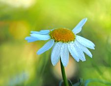 Free Close Up Photography Of A White Aster Flower In Bloom At Daytime Stock Photos - 88263553