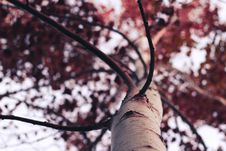 Free Tree With Foliage Stock Images - 88263794