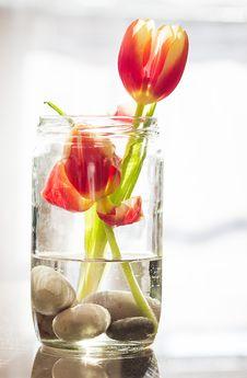 Free Tulips In Vase Royalty Free Stock Photos - 88264228