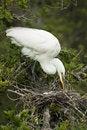 Free White Heron With Eggs Stock Photo - 8832820