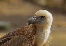Free Eagle Portrait Royalty Free Stock Photography - 8830297