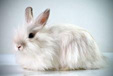 Free White Fluffy Rabbit Stock Photos - 8830473