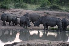 Free White Rhinoceros At Water Hole Royalty Free Stock Image - 8833656