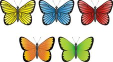Free Butterfly Collection Stock Photos - 8833973