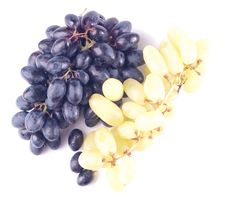 Free Ripe Grape Isolated Stock Image - 8834491