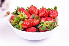 Free Cat Smells Strawberry Royalty Free Stock Image - 8834696