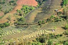 Free Terrace Rice Field In The Mountain Stock Image - 8835161