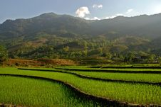 Curves Of Terrace Rice Field In The Mountain Stock Photography