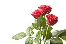 Free Bouquet Of Red Roses Royalty Free Stock Photo - 8835415