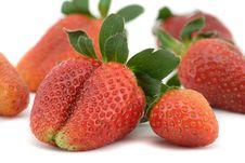 Free Fresh Srawberry Stock Photo - 8835420