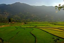 Free Curves Of Terrace Rice Field In The Mountain Royalty Free Stock Images - 8835469