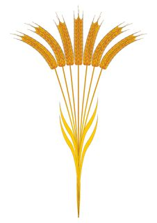 Free Seven Wheat Ears Royalty Free Stock Image - 8835666