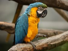 Free Macaw Parrot Royalty Free Stock Photography - 8835867