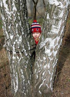 Little Girl With A Birch Stock Photos