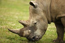 Free White Rhino Stock Photography - 8835932