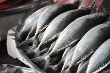 Free Mackerel Fish Set Market Royalty Free Stock Photos - 8836598