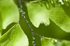 Free Green Leaf With Drops Stock Photography - 8837002