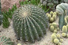 Free Cactus Stock Images - 8837804