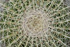 Free Cactus Spine Micro Royalty Free Stock Photo - 8837815