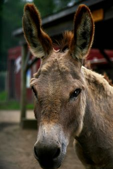 Free Donkey Portrait Royalty Free Stock Photos - 8838818