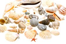 Free Beautiful Seashells Isolated On White Stock Photos - 8839543