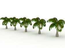 Free Row Of Palms Royalty Free Stock Image - 8839706