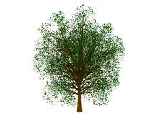 Free Green Tree Stock Photography - 8839742