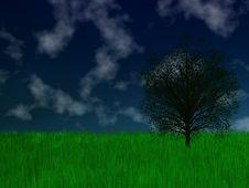 Free Green Tree Stock Photo - 8839860