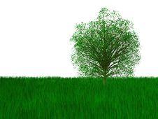 Free Green Tree Stock Photos - 8839903