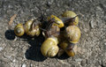 Free Group Of Snails Stock Photos - 8847253