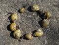 Free Snail Round Royalty Free Stock Image - 8847286