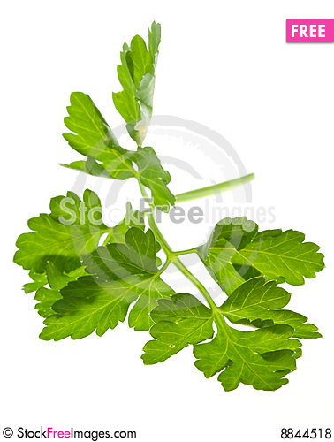 Sprig of parsley Stock Photo